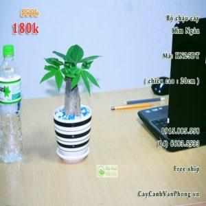 cay-kim-ngan-1-300x300 Tìm hiểu cây kim ngân