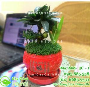 34-300x290 Cây Tài Lộc