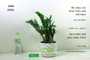 kt1-300x200 CÂY KIM TIỀN, CÂY CẢNH PHONG THỦY, TÀI LỘC GIÀU SANG